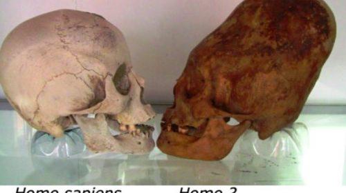 Crani allungati